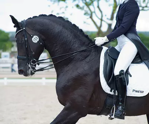 dressage, horse, and performance image