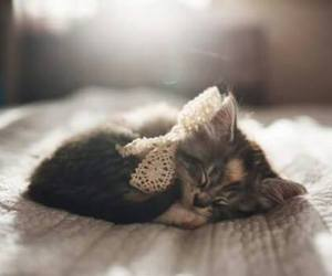 adorable, dreamer, and kitten image