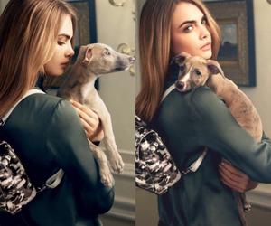 cara delevingne, dog, and model image