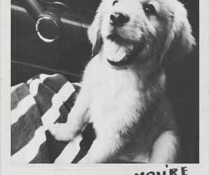 dogs, polaroid, and cute image