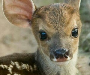 animals, deer, and cute image