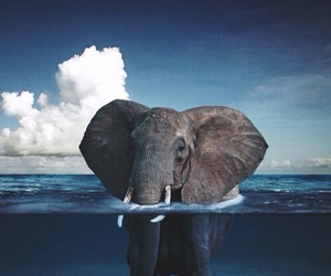 background, elephant, and ocean image