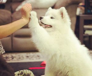 dog, hand, and cute image