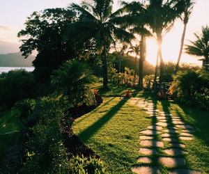 garden, palm trees, and path image