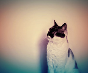cat, animal, and hipster image