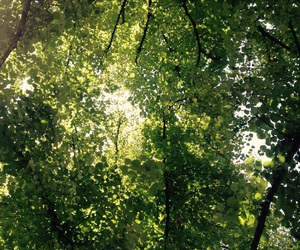 beautiful, green, and leaves image