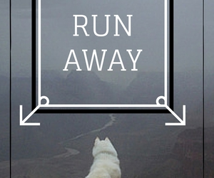 dogs, forest, and runaway image