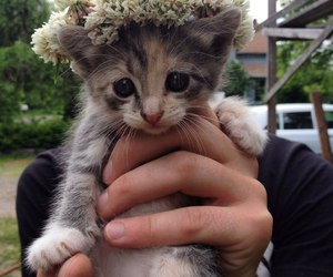 cat, nice, and cute image