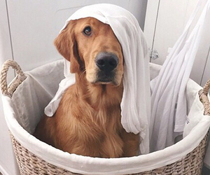 cute and dog image