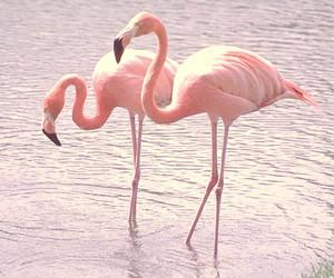 animal, flamingo, and water image