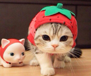 cat, cute, and strawberry image