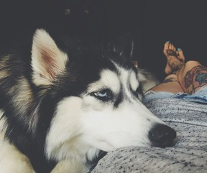 chill, dog, and cute image