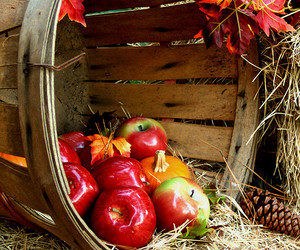 apples, fall, and autumn image