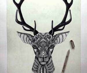 deer, drawings, and pencil image