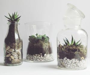 cactus, deco, and diy image