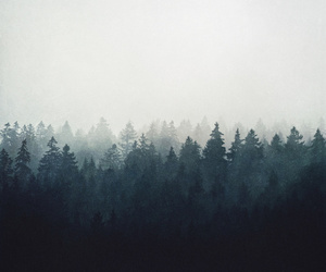 art, black, and forest image