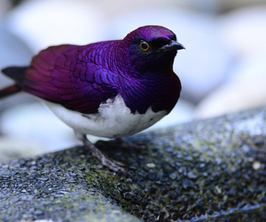 bird, photography, and purple image
