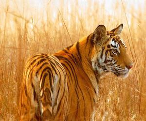fog, india, and tiger image