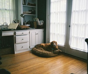 dog and room image