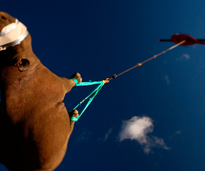funny, helicopter, and hippo image
