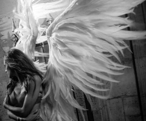 angel, wings, and sexy image