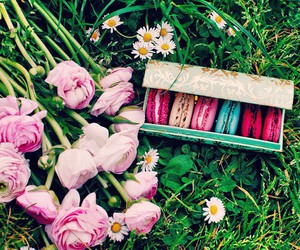 pink, flowers, and food image
