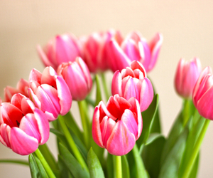 flowers, pink, and tulip image