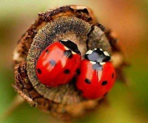 ladybug, nature, and red image