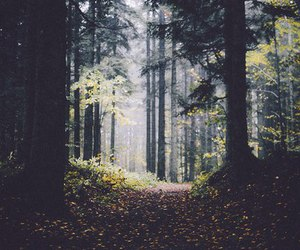 forest, beautiful, and trees image