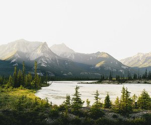 mountains, forest, and green image