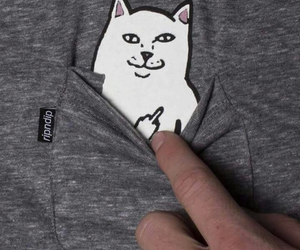 cat, shirt, and funny image