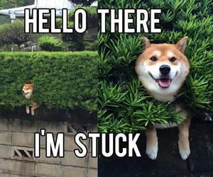 dog, funny, and stuck image