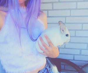 Chinchilla, dyed hair, and fur image