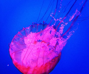 jelly fish and pink image