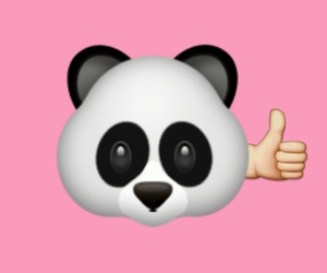 animal, overlay, and panda image