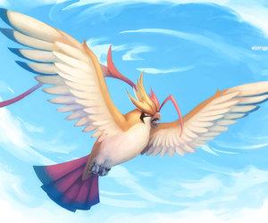 pokemon, pidgeot, and mega evolution image