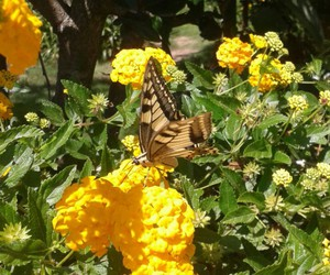 butterfly, fiori, and farfalla image