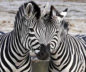 adorable, bff, and stripes image