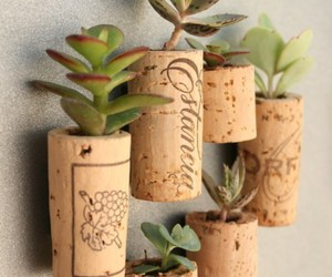 plants, cork, and diy image