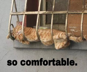 animals, comfortable, and cat image