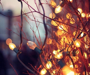 light, autumn, and winter image