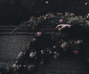 flowers, hand, and dark image