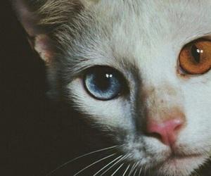 cat, eyes, and animal image