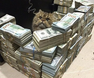 cat, money, and rich image