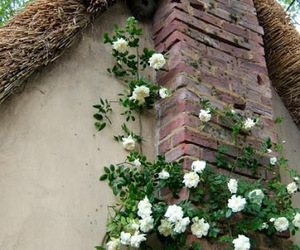 france, climbing roses, and romantic image