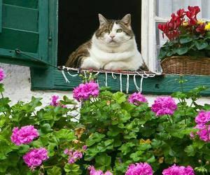 animal, beautiful, and nature image