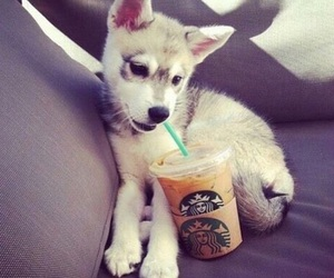 animals, coffee, and cute animals image