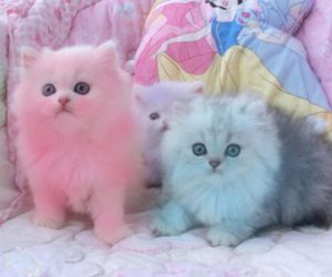 cat, kitten, and pink image