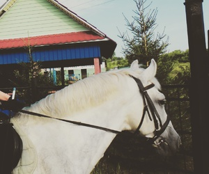 equestrian, ЛОШАДИ, and horse image