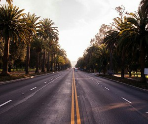 road, summer, and palms image